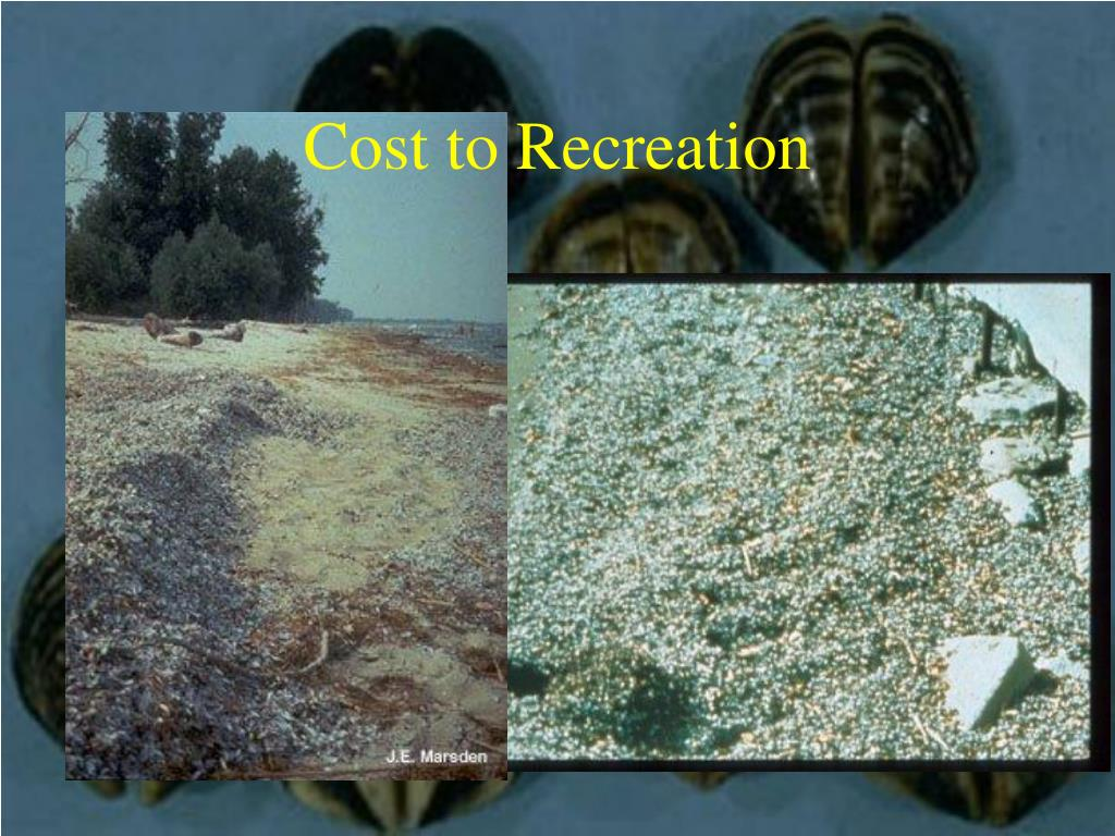 Cost to Recreation