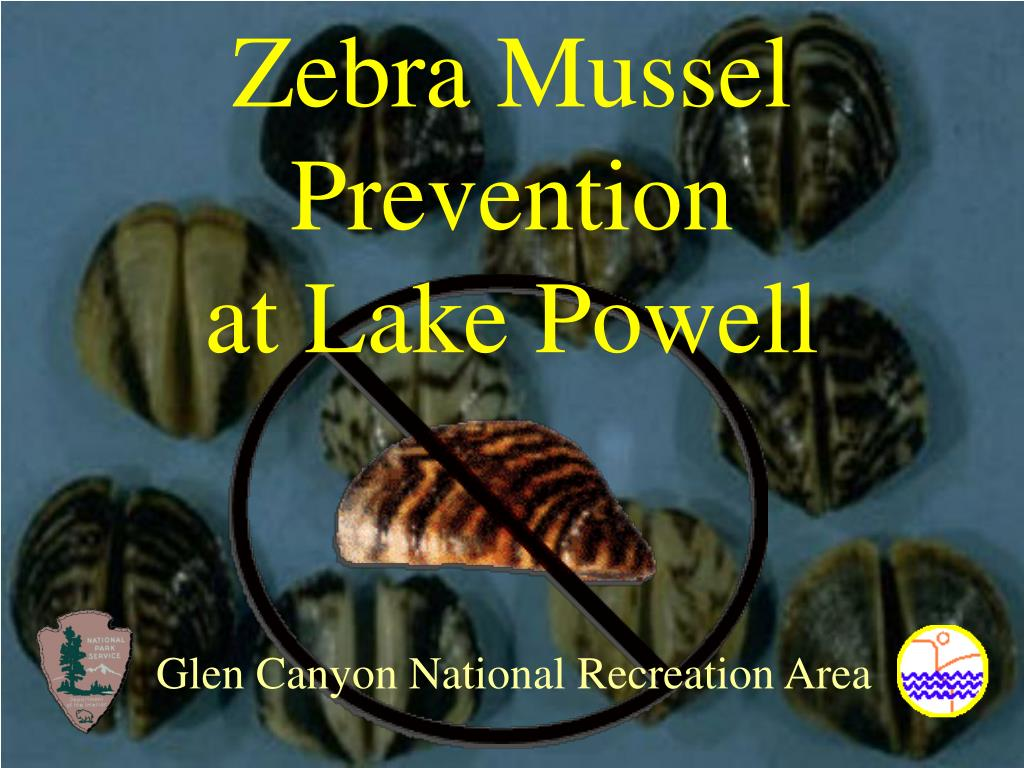 zebra mussel prevention at lake powell l.