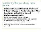 example 1 zebra mussels and native bivalves