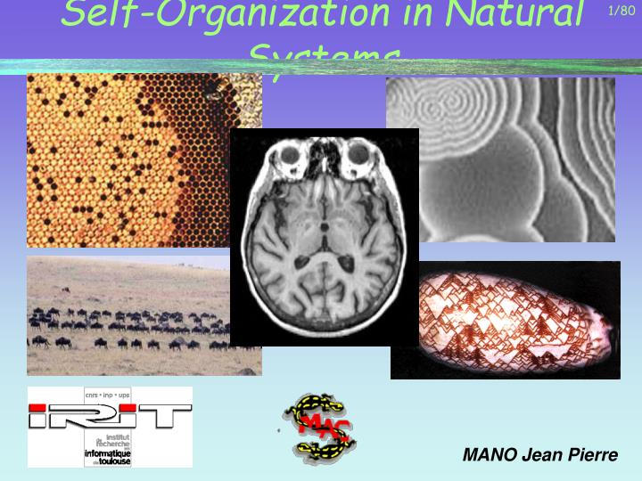 self organization in natural systems n.