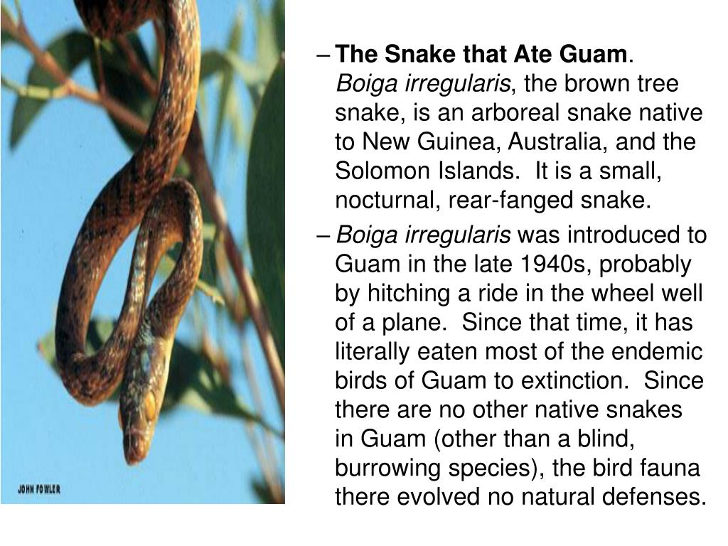 The Snake that Ate Guam