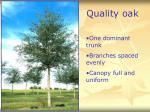 quality oak