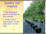 quality red maples