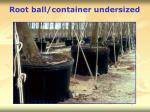 root ball container undersized