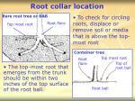 root collar location