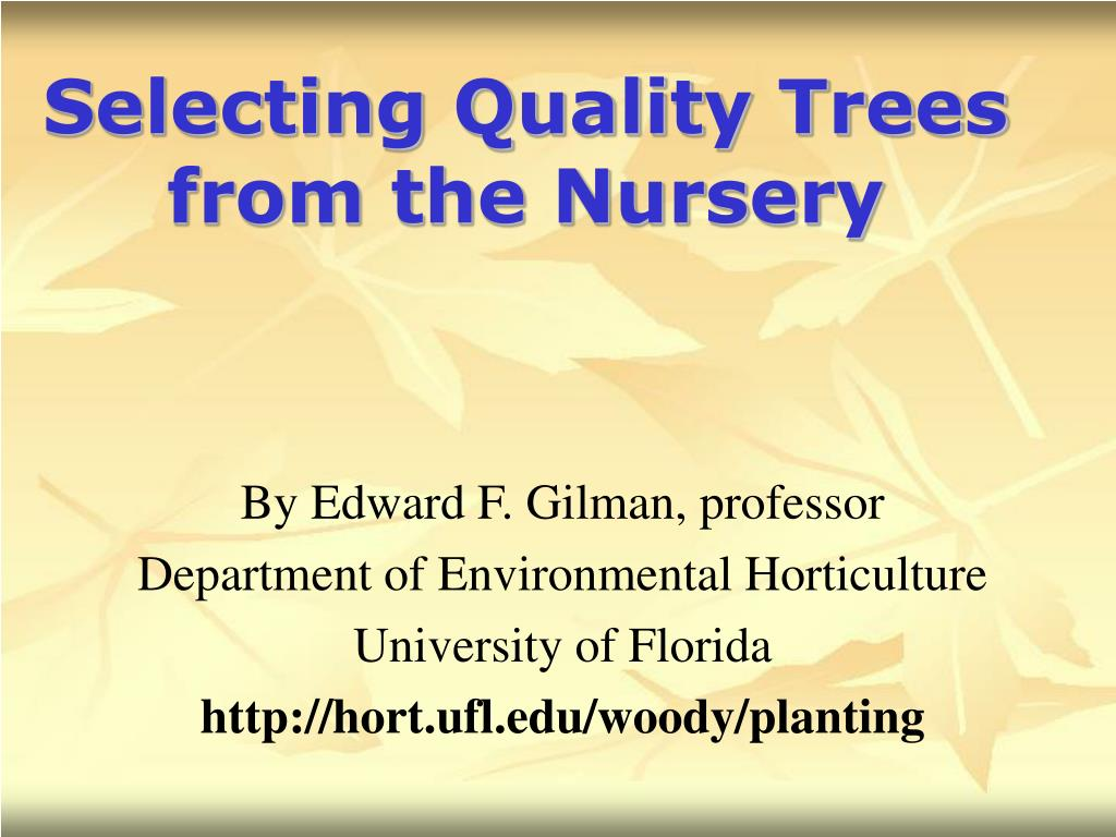 selecting quality trees from the nursery l.