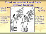 trunk moves back and forth without bending