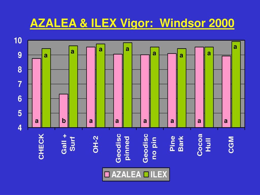 AZALEA & ILEX Vigor:  Windsor 2000