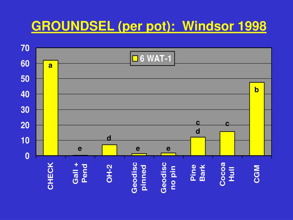 GROUNDSEL (per pot):  Windsor 1998