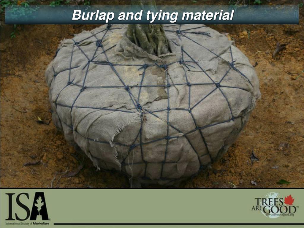 Burlap and tying material