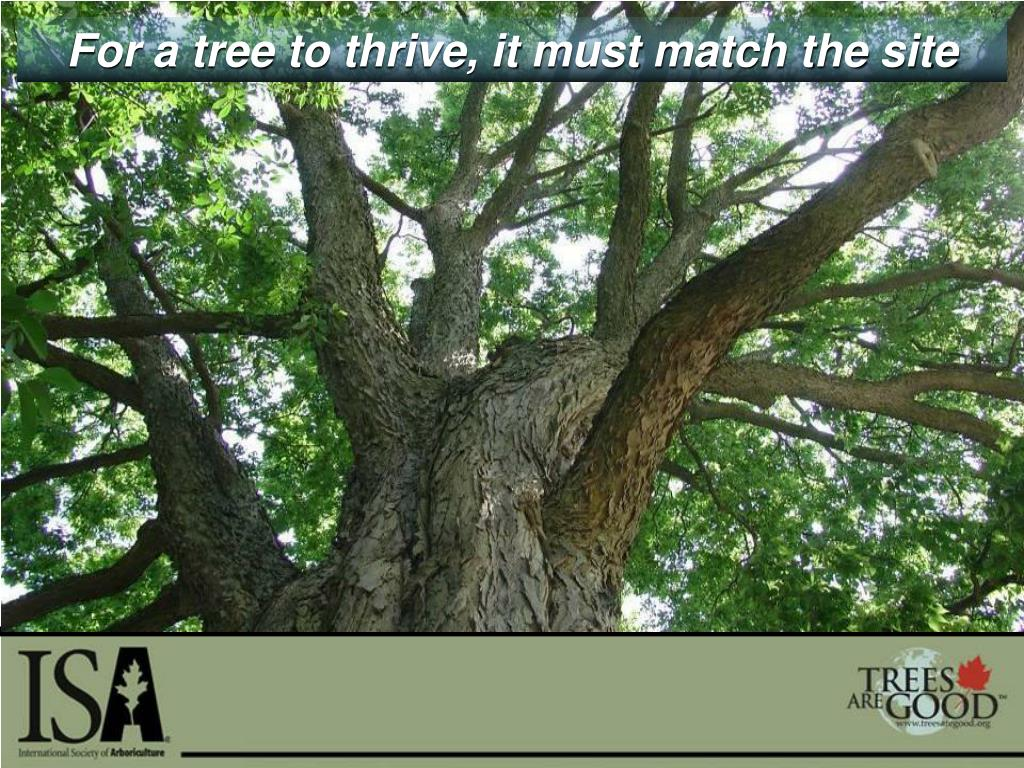 For a tree to thrive, it must match the site
