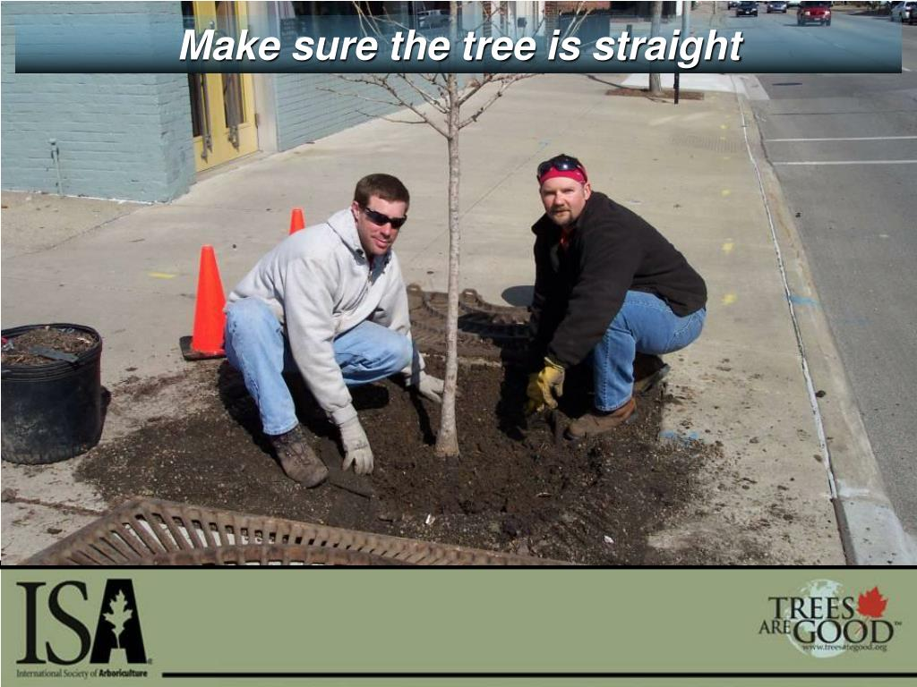 Make sure the tree is straight