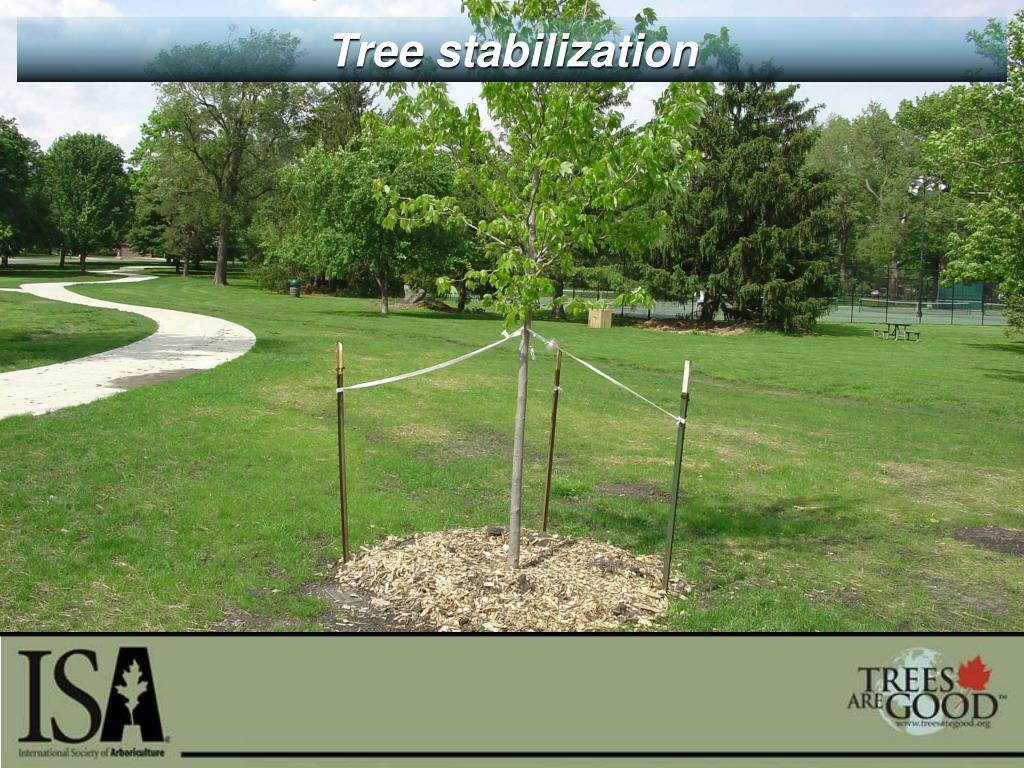 Tree stabilization