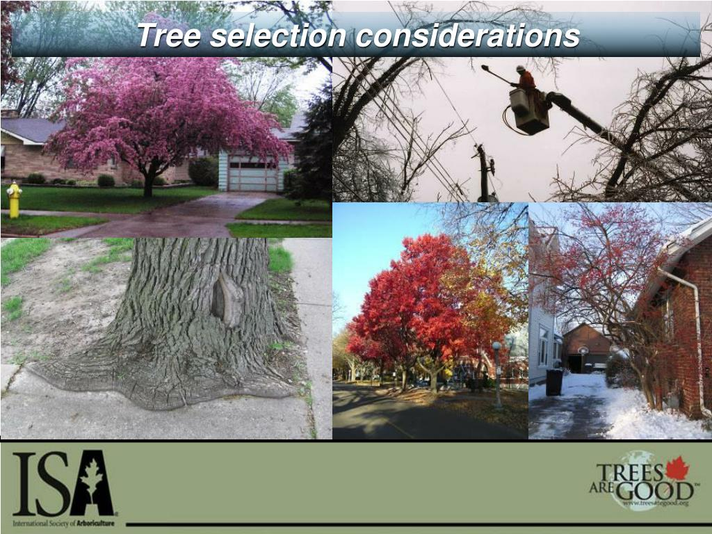 Tree selection considerations