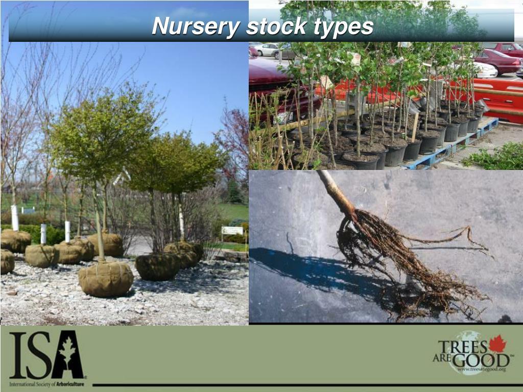 Nursery stock types