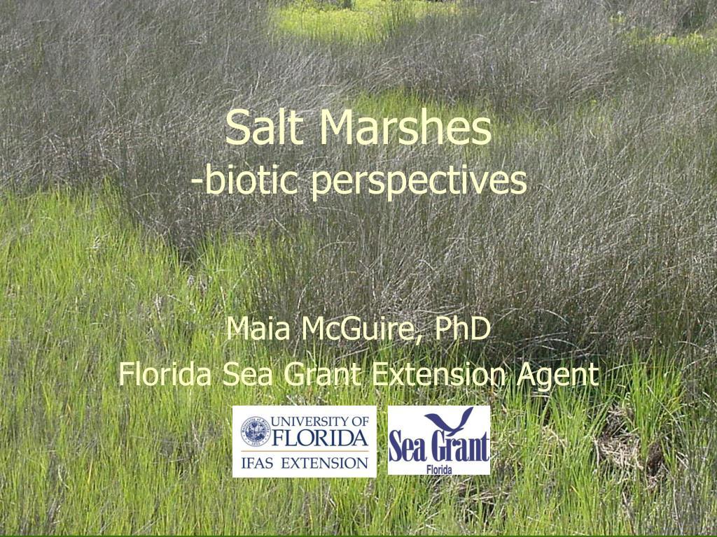 salt marshes biotic perspectives l.