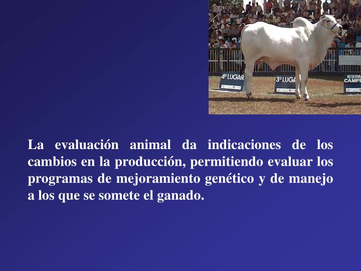 La evaluación animal da indicaciones de los cambios en la producción, permitiendo evaluar los programas de mejoramiento genético y de manejo a los que se somete el ganado.