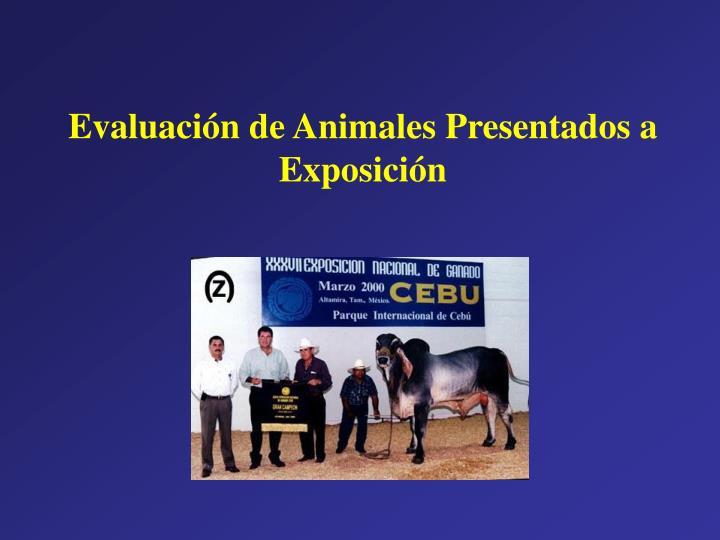 Evaluación de Animales Presentados a Exposición