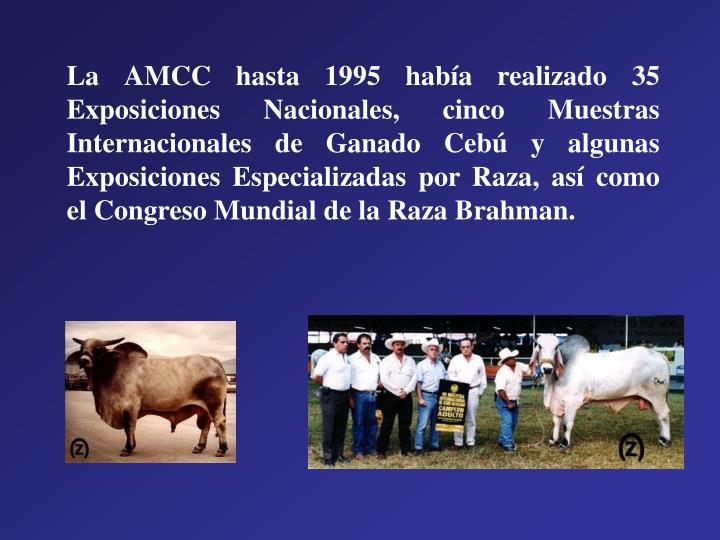 La AMCC hasta 1995 había realizado 35 Exposiciones Nacionales, cinco Muestras Internacionales de Ganado Cebú y algunas Exposiciones Especializadas por Raza, así como el Congreso Mundial de la Raza Brahman.
