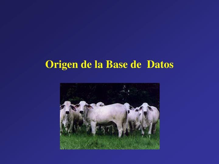Origen de la Base de  Datos
