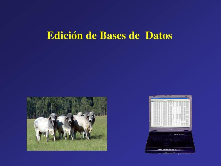 Edición de Bases de  Datos