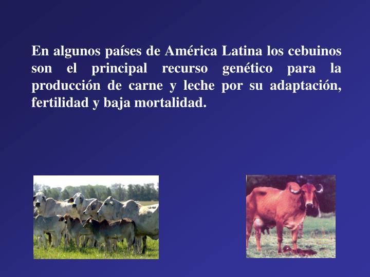 En algunos países de América Latina los cebuinos son el principal recurso genético para la producción de carne y leche por su adaptación, fertilidad y baja mortalidad.