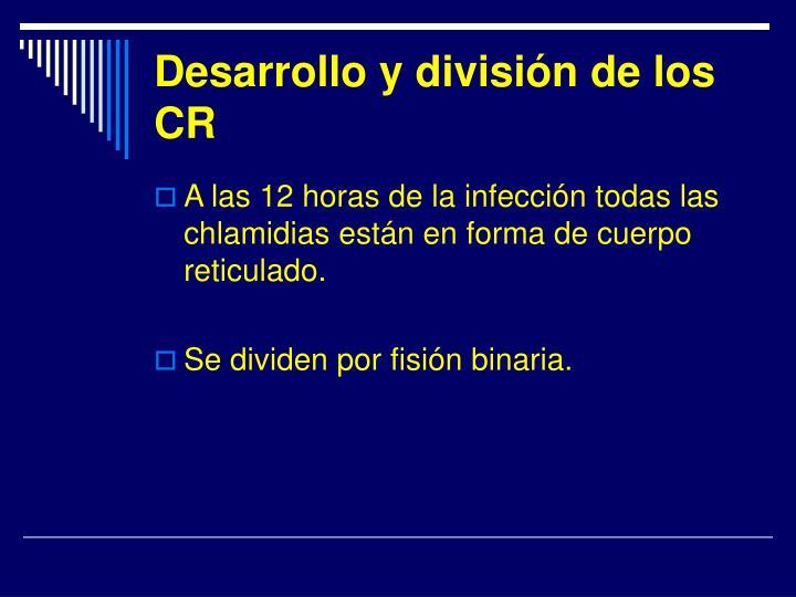 Desarrollo y división de los CR