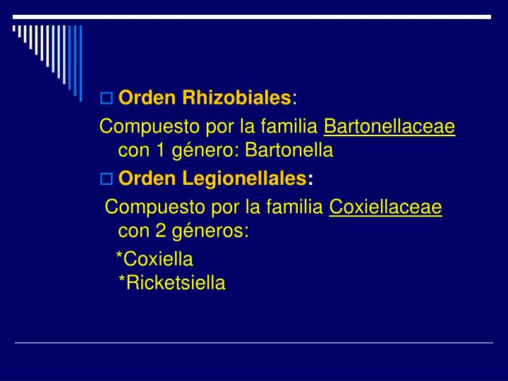 Orden Rhizobiales