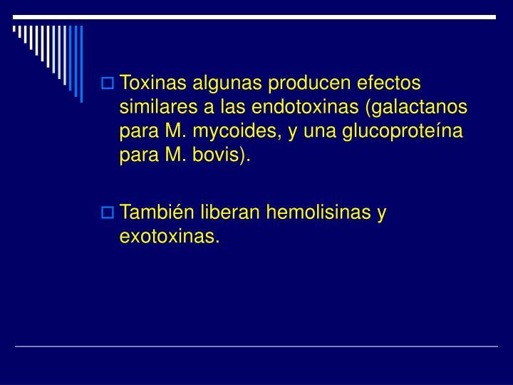 Toxinas algunas producen efectos similares a las endotoxinas (galactanos para M. mycoides, y una glucoproteína para M. bovis).