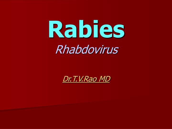rabies rhabdovirus n.