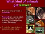 what kind of animals get rabies
