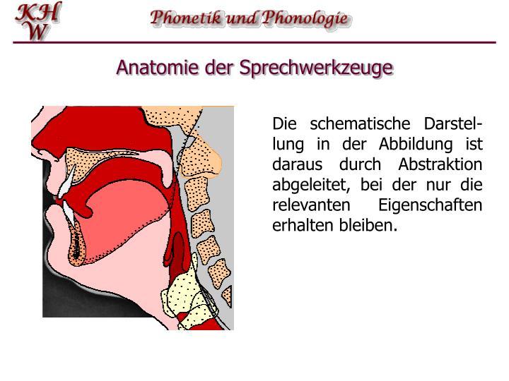PPT - Einführung in die Phonetik und Phonologie PowerPoint ...