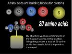 amino acids are building blocks for proteins11