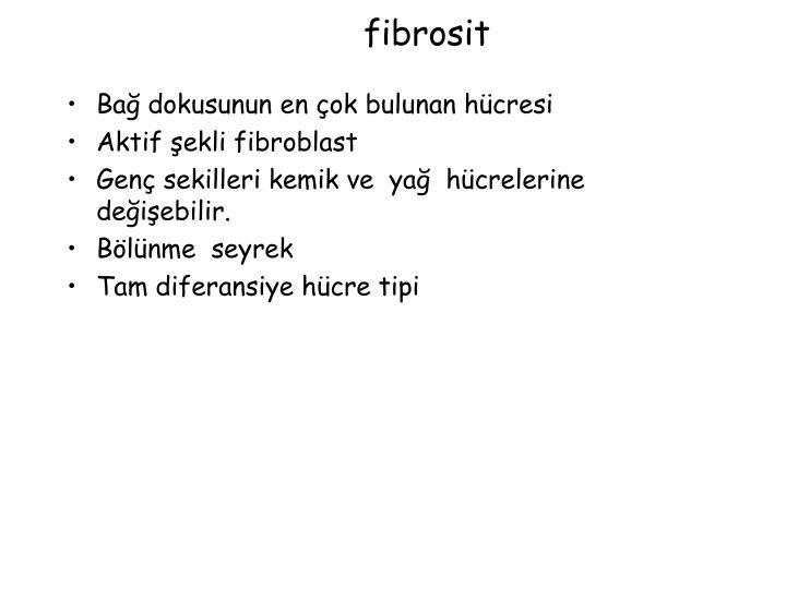 fibrosit