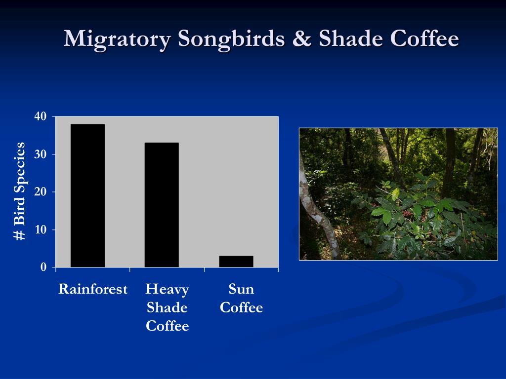 Migratory Songbirds & Shade Coffee