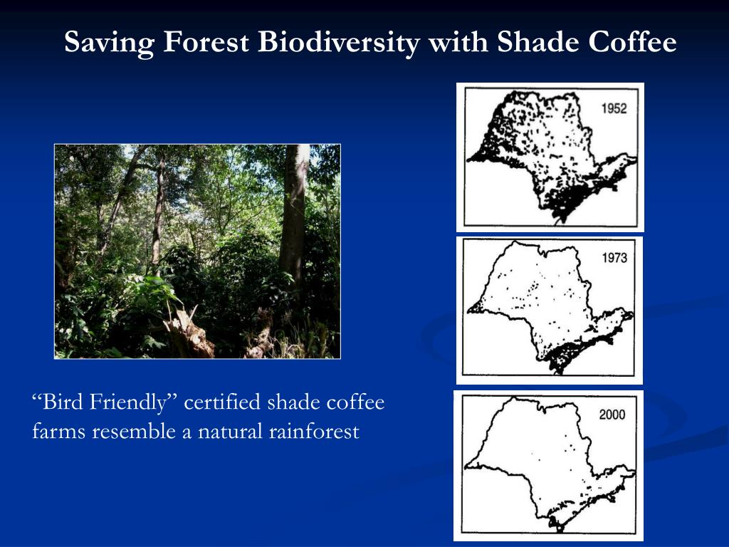 Saving Forest Biodiversity with Shade Coffee