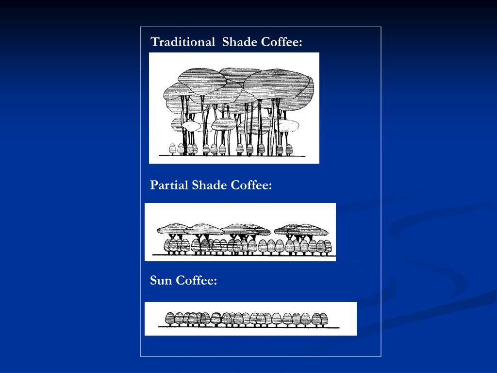 Traditional  Shade Coffee: