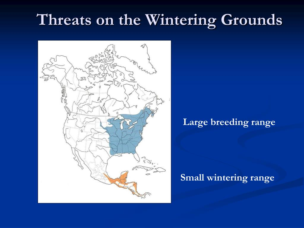 Threats on the Wintering Grounds