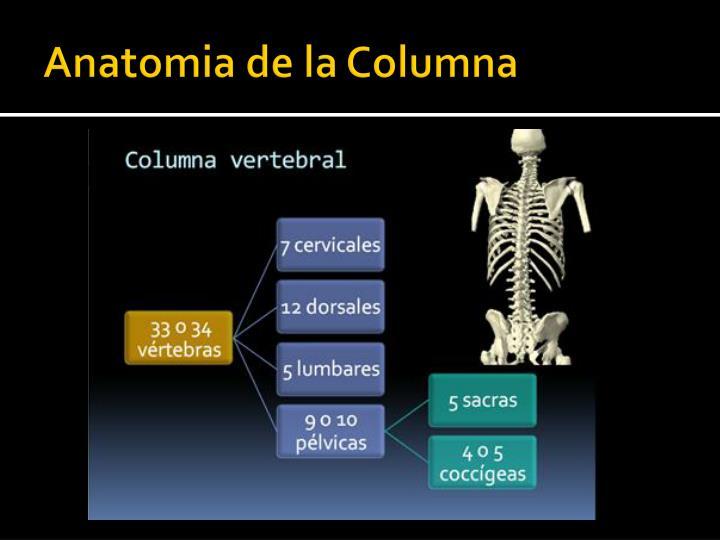 PPT - Semiologia de Columna Vertebral PowerPoint Presentation - ID ...