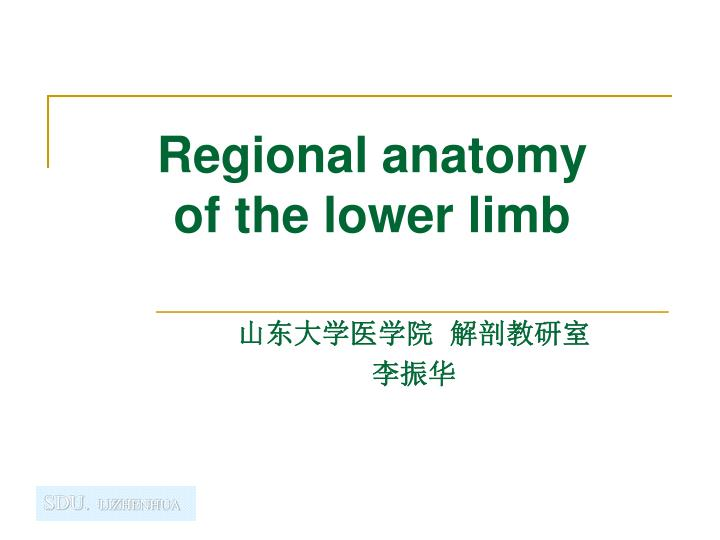 regional anatomy of the lower limb n.