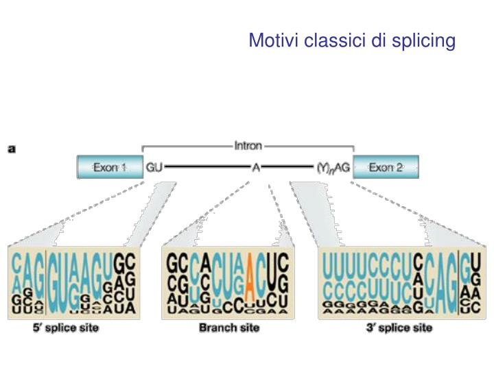 Motivi classici di splicing