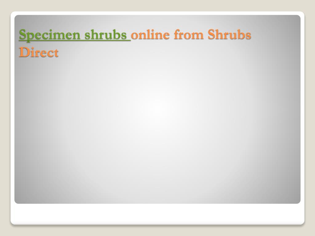 specimen shrubs online from shrubs direct l.