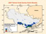 2007 tanner crab survey catch density