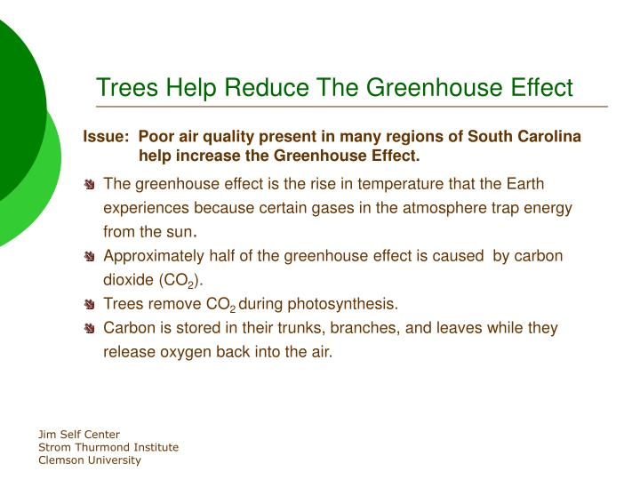 Trees Help Reduce The Greenhouse Effect