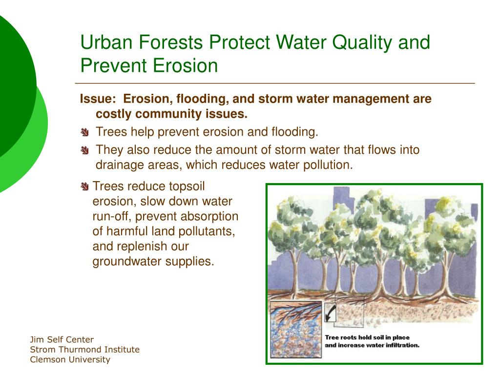 Urban Forests Protect Water Quality and Prevent Erosion