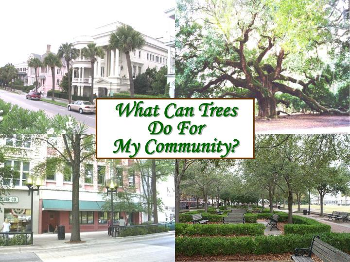 What can trees do for my community