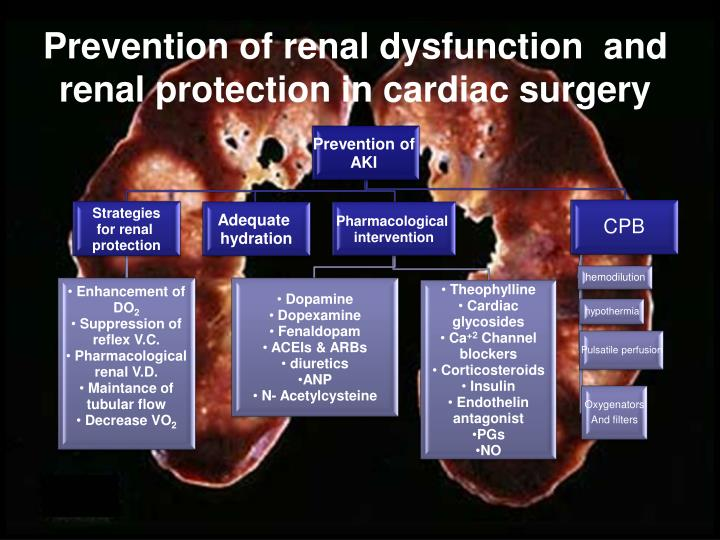 Prevention of renal dysfunction  and renal protection in cardiac surgery