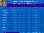 harvesting schedule of sugarcane varieties