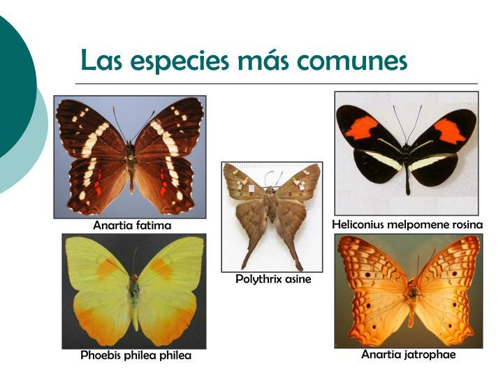 Las especies más comunes