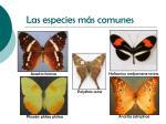 las especies m s comunes